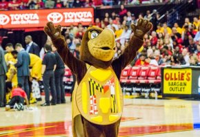 Maryland Terrapins basketball mascot