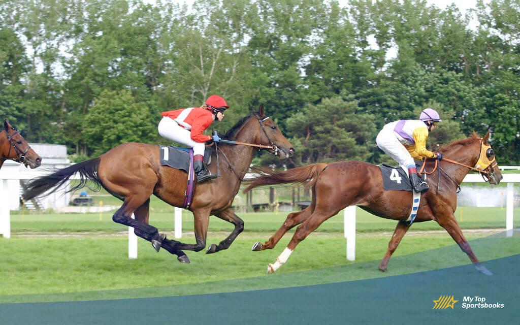 horse racing betting odds